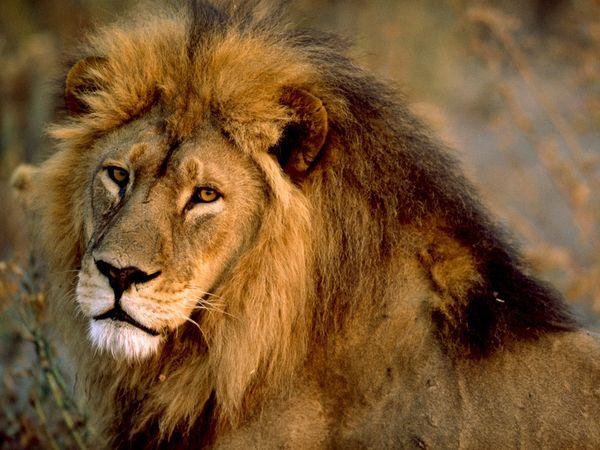 Fondos De Pantallas 3d De Animales: 200 Fondos De Pantalla De Animales Salvajes Para Mac (I