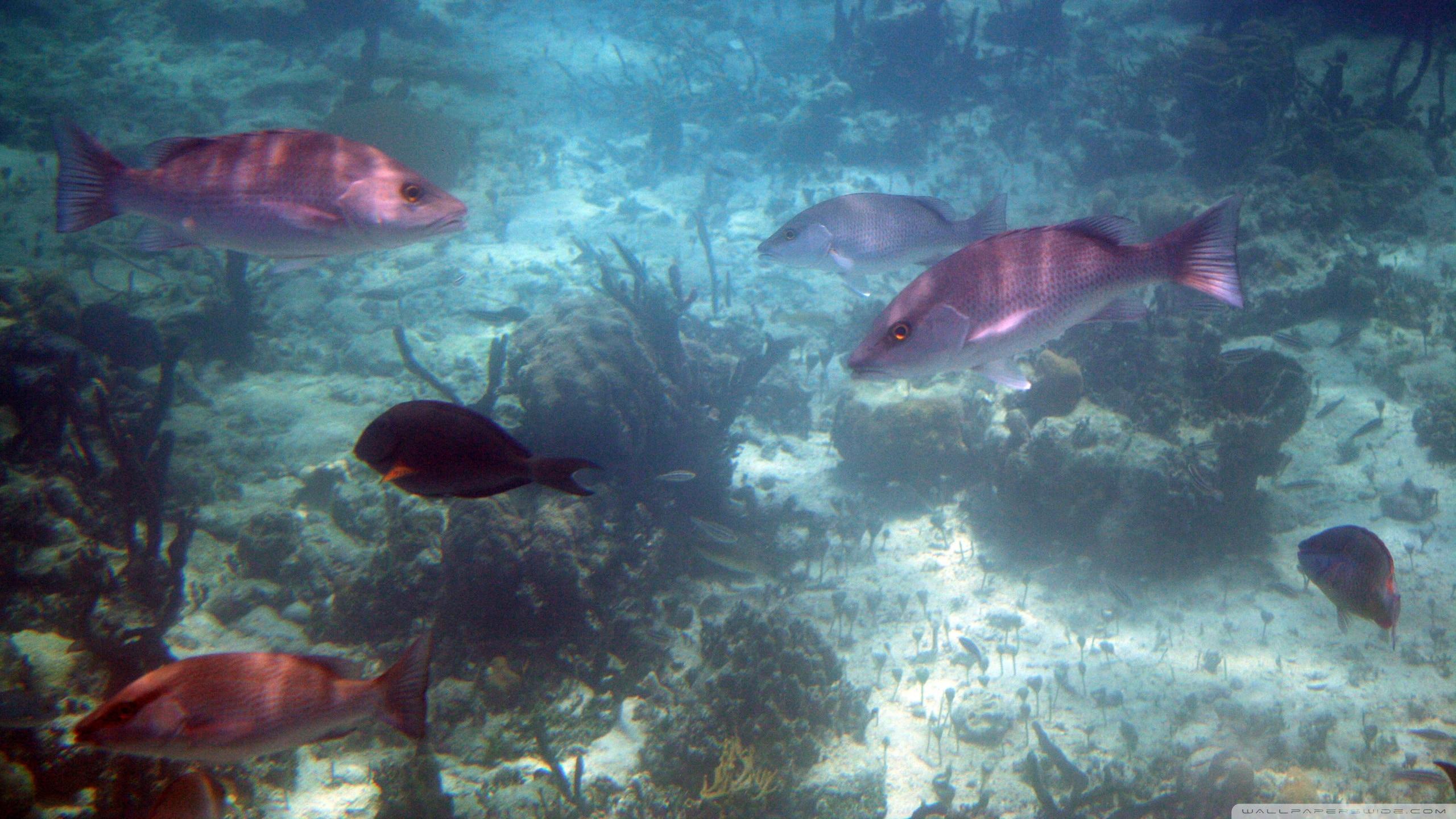 背景 壁纸 海底 海底世界 海洋馆 皮肤 水族馆 星空 宇宙 桌面 2560