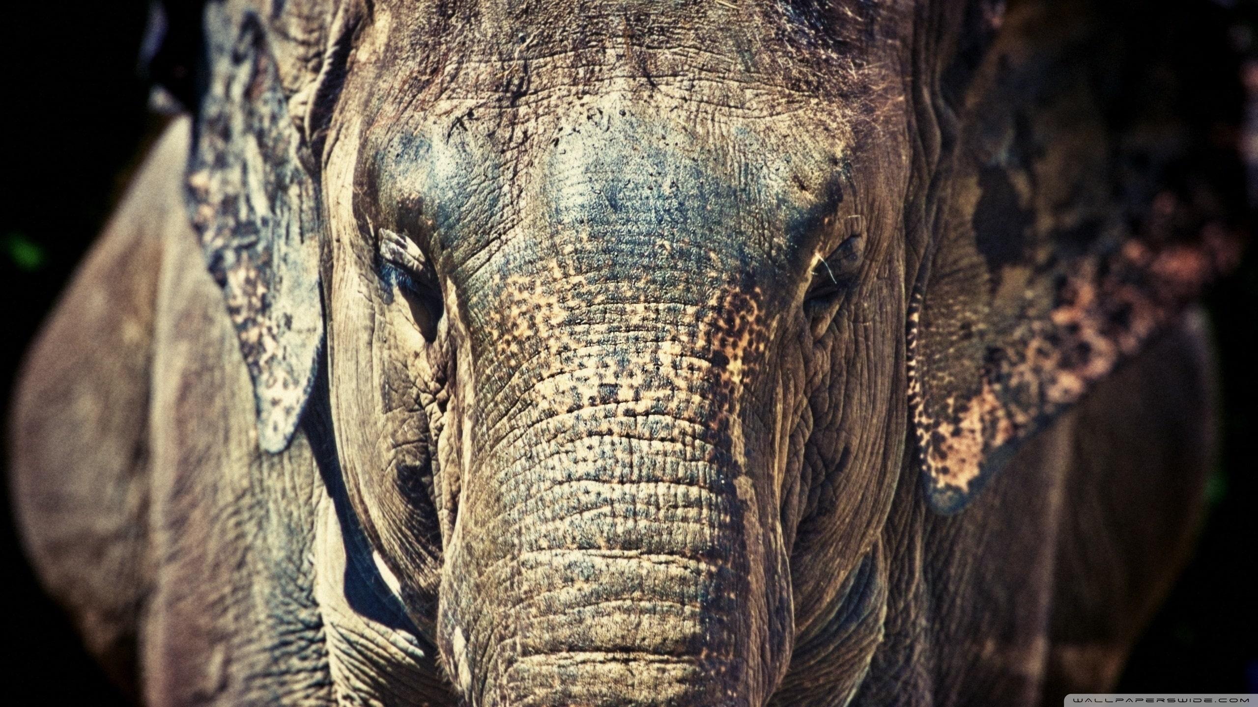 200 Fondos De Pantalla De Animales Salvajes Para Mac I