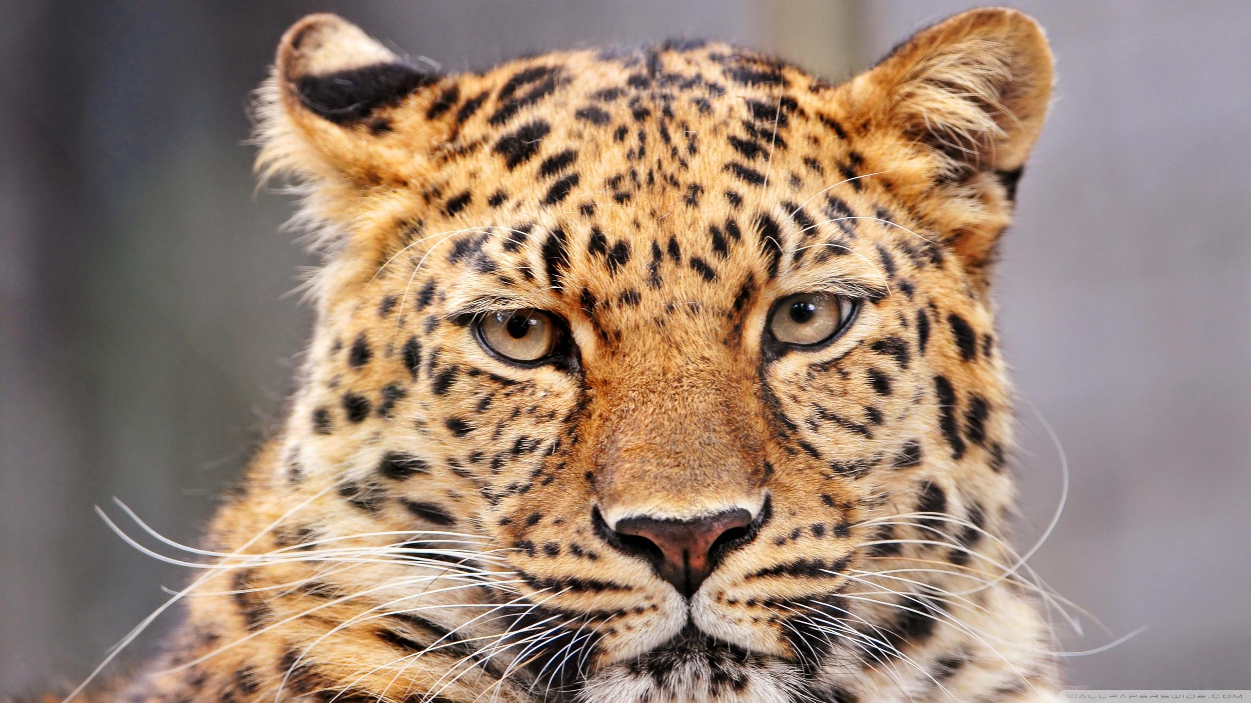 Fondos De Animales Animados: 200 Fondos De Pantalla De Animales Salvajes Para Mac (I